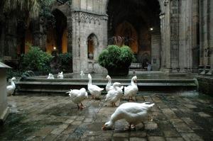 Les oies du cloitre de la cathédrale